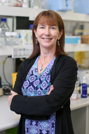 Associate Professor Tracy Bryan